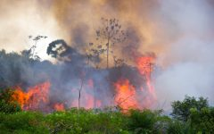 Fires continue to negatively impact the Amazon rainforest
